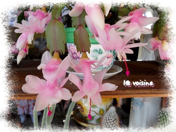 cactusnoel-nacre-pres.jpg