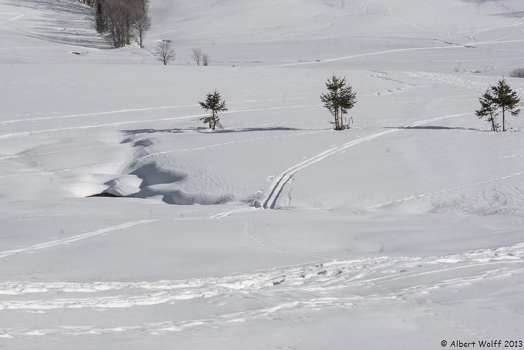 Dernières neiges - fin.