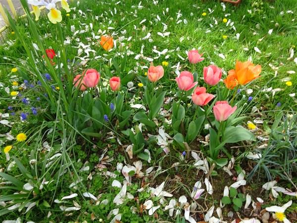 Le printemps est arrivé au jardin