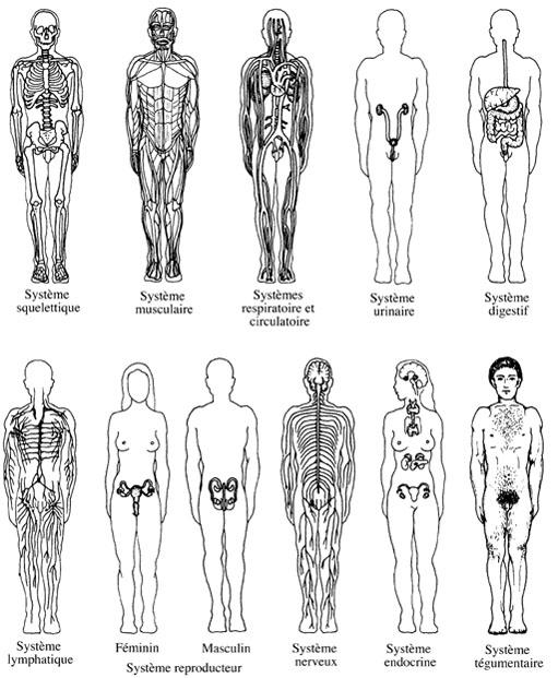 mecanique du corps humain