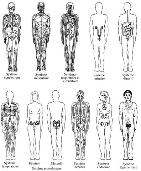 La Physiologie