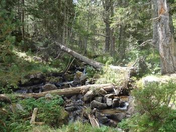 Le ruisseau de Balcère