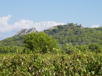 """Derrière les vignes, la """"Montagne"""" des Mèdes et, à droite, la """"Pointe du Bon Dieu""""."""