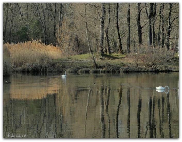 Les bord du Rhône refuge pour les oiseaux - suite