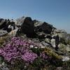 Jardin de fleurs  en arrivant au sommet du pic des Sècres