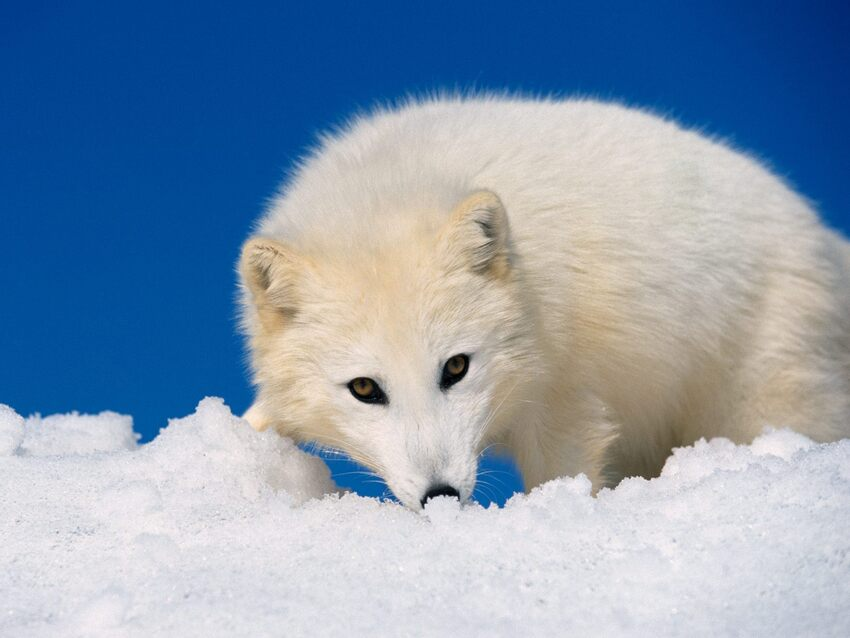 10 images d'animaux