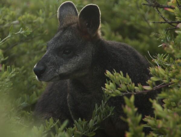 animaux marsupiaux1