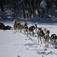 Le terrain de jeux idéal des mushers - Vallée d'Abondance - Février 2015