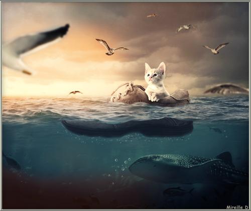Périple Fantastique en Mer