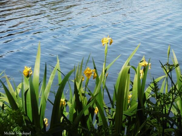 Une balade au Lac de Christus à SAINT PAUL LES DAX (40), le 6 mai (suite n° 3 et fin)