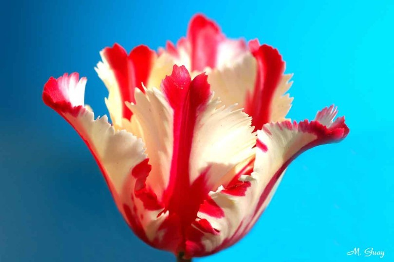 Floraison-1581-rec-2.jpg