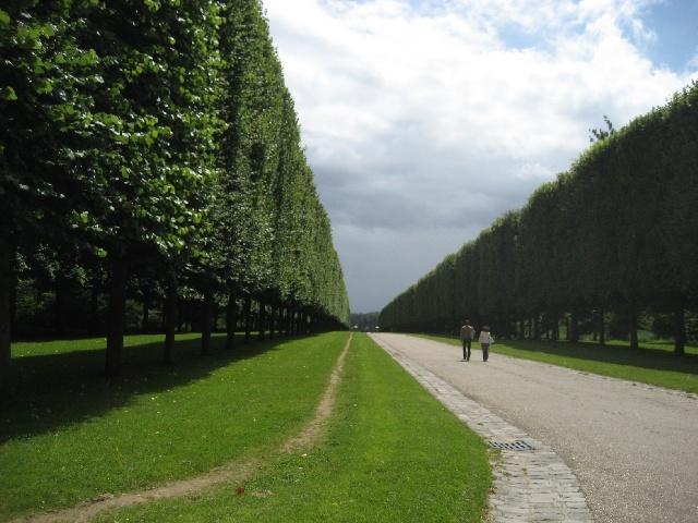 Une magnifique avenue... d'arbres...