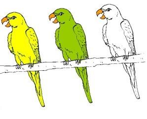 3 perroquets couleurs b