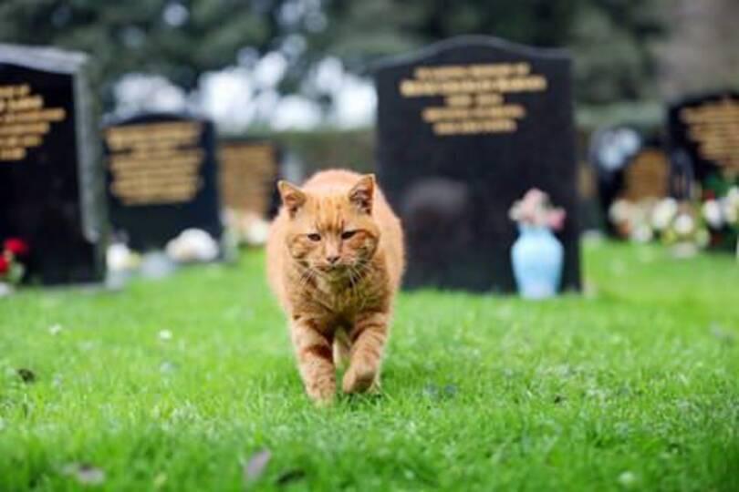 Un_chat_de_cimetière_qui-04