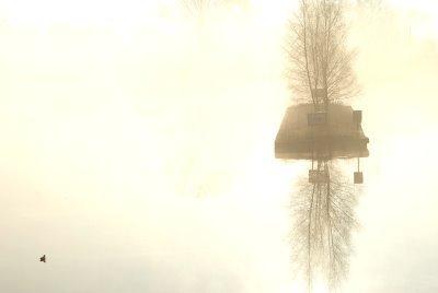 canard-canal-brouillard-er-soleil.jpg
