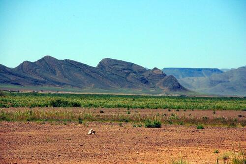 Un désert verdoyant