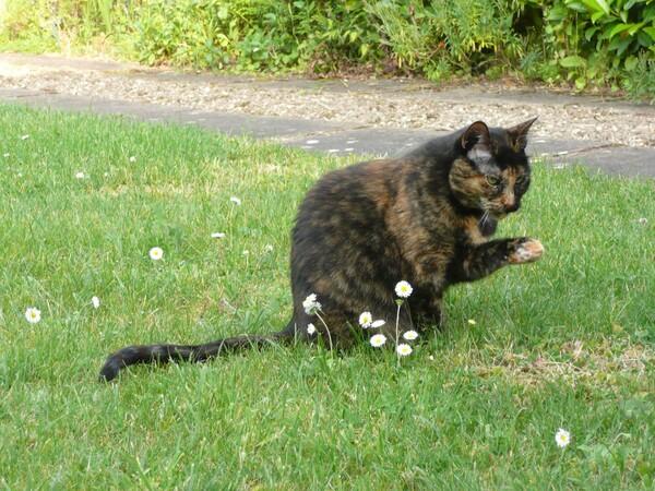La chatte aux pâquerettes
