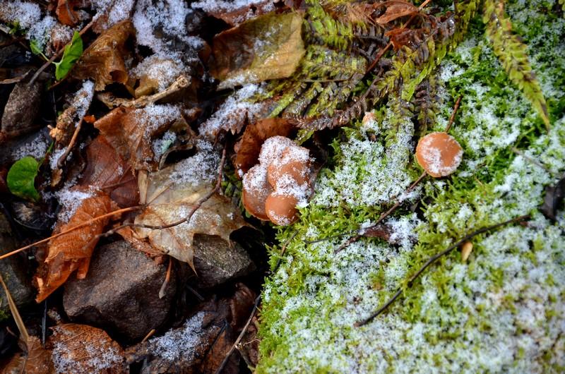 hwk vieil armand hartmannswillerkopf alsace vosges schnoebelen