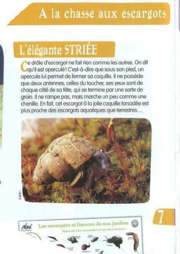 ESCARGOT 30 MILLIONS AMIS-copie-1