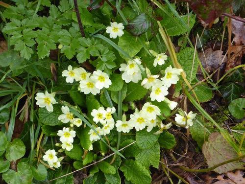 mardi - Treize Septiers,  l'arrivée du printemps