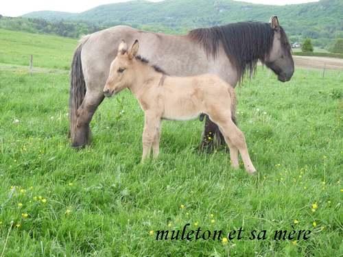Le grand Almanach de la France : Les ânes de l'île de Ré.