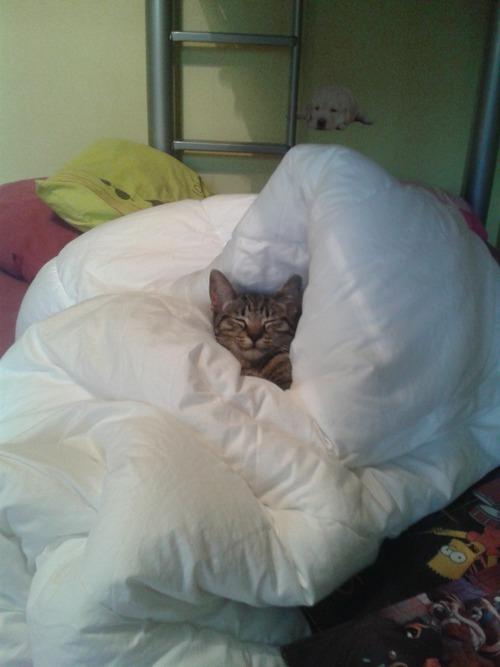 Dur dur la vie d'un chat ! -0-