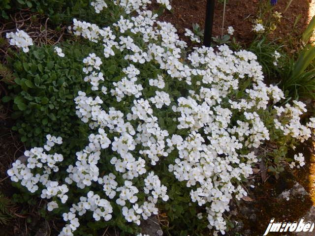 Le printemps est arrivé  ,la préparation de la terre du potager