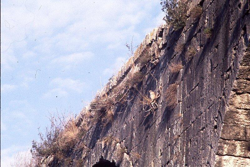 castries-aqueduc-faucon