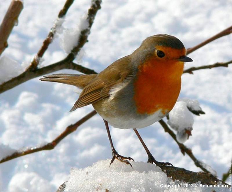 Les oiseaux de nos jardins rastignac for Jardin des oiseaux