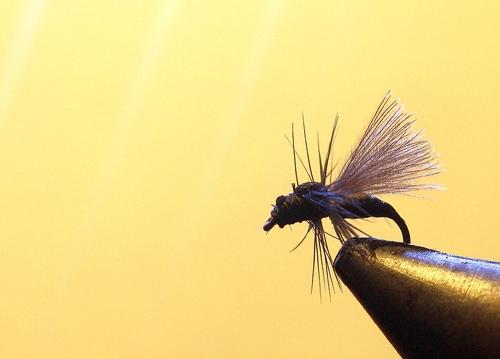 La fourmi (1)