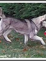 Janouska (13 mois)