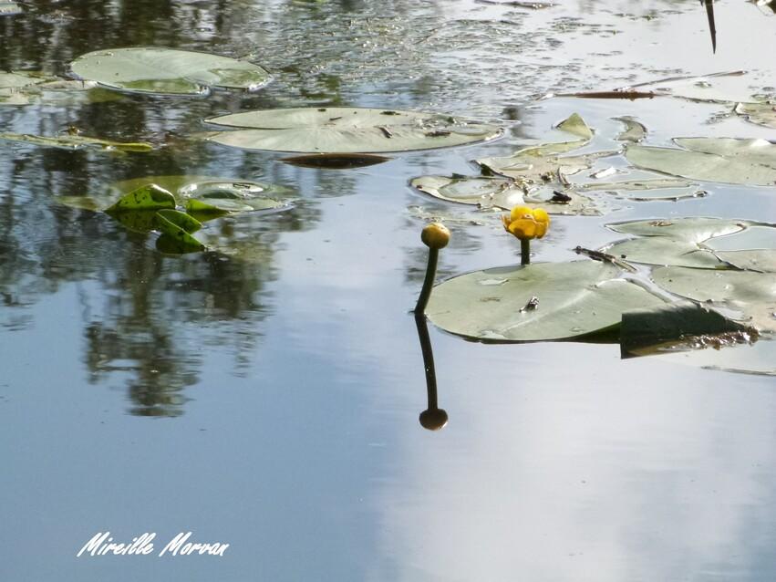 Au étang