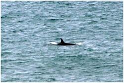 C'est assez les baleines et pas bandits ces manchots