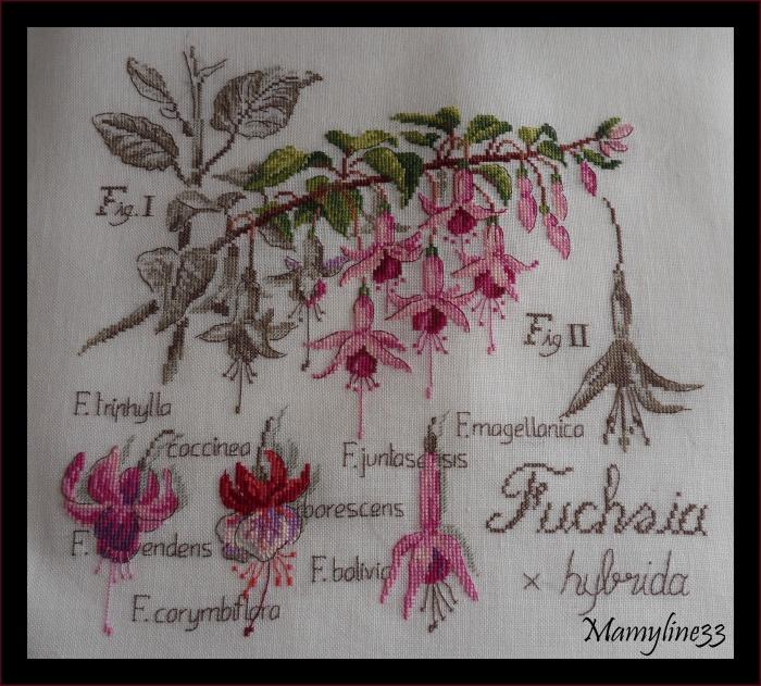 Etudes botaniques avancées d'octobre