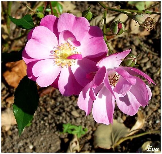 Un bouquet de fleurs.