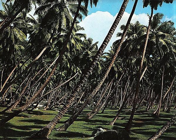 754px-Coconut_plantation_La_Digue.jpg