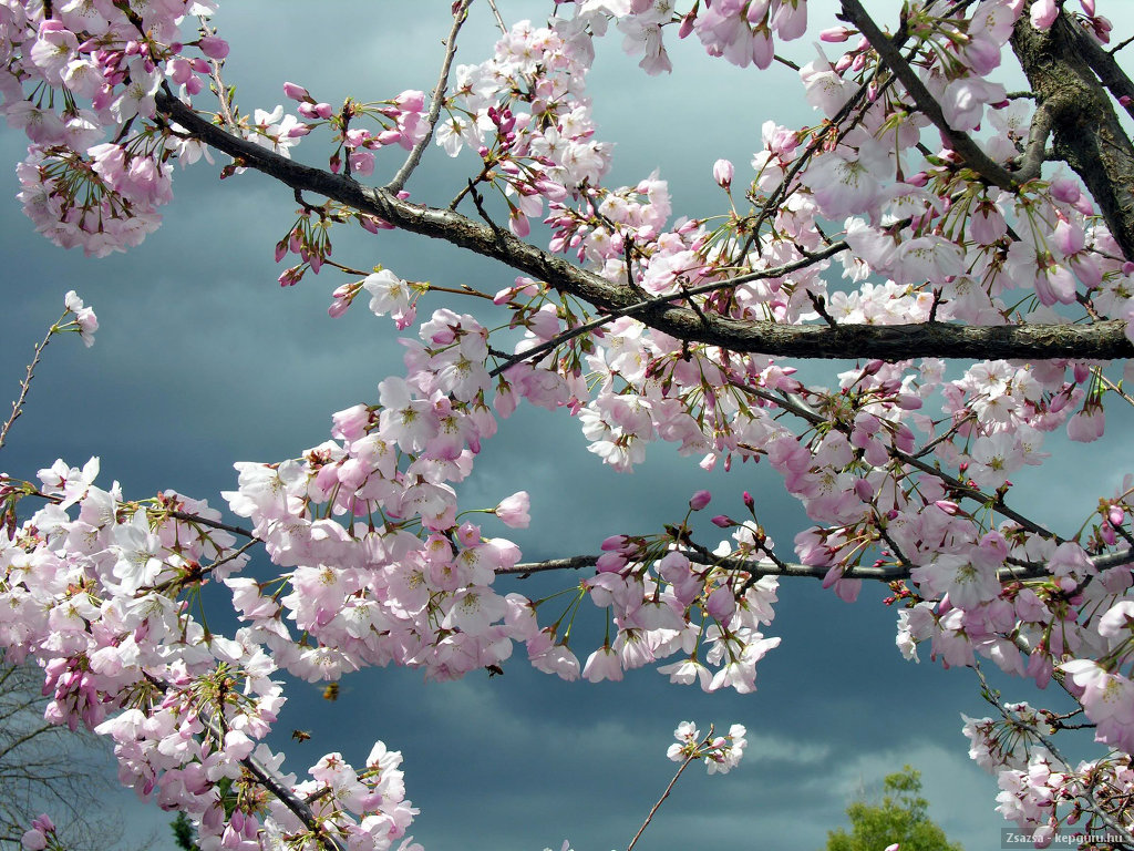 Tavaszi fotók