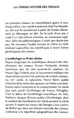 Le-Petit-Livre-des-Oiseaux-3.JPG