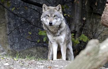 Arrêtez de crier au loup ...