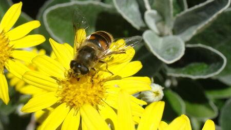 abeilles_10