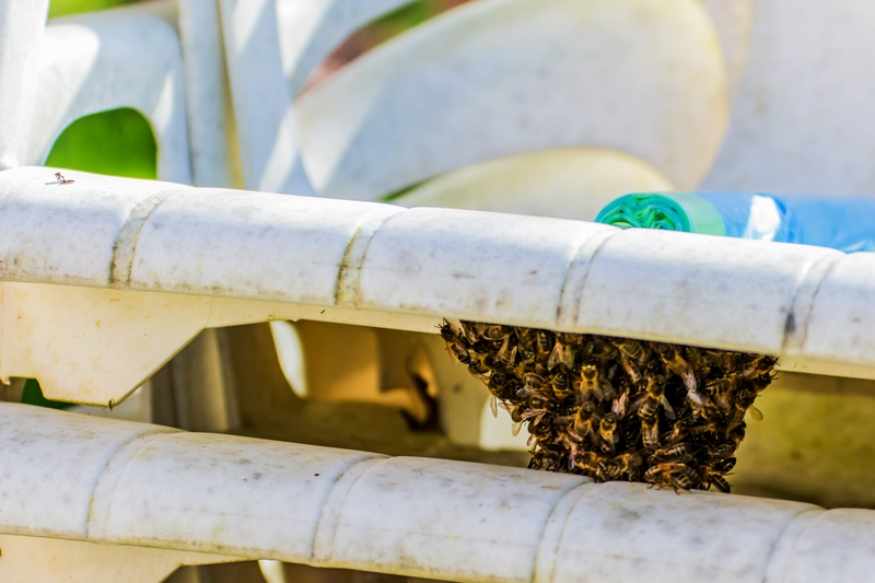 Bzz Bzz les abeilles !!