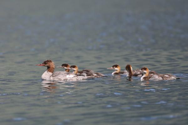 En famille sur le lac Mac Donald