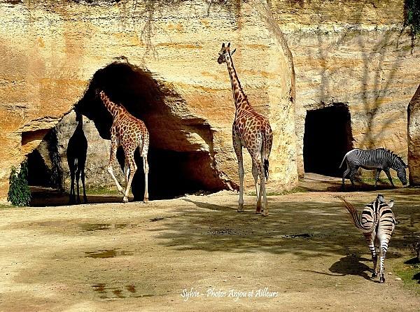 zoo-de-Doue--ob-.jpg
