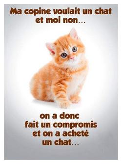 Chien et chat: meilleurs ennemis?