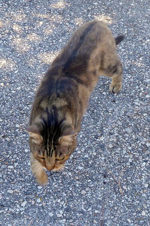 Le beau chat d'un voisin !