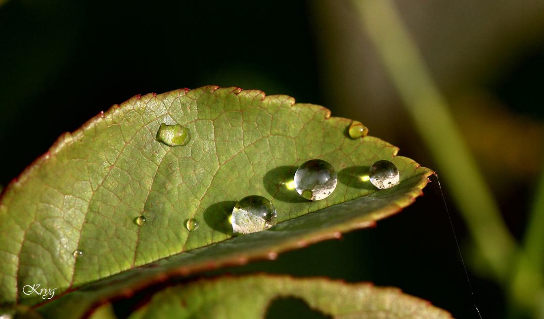 Quand la pluie se fait joaillière