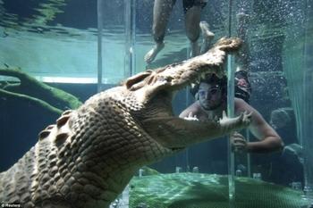 crocosaurus-cove-darwin-australia-600x399