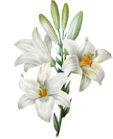 *** 03 - Fleurs de Lys ***