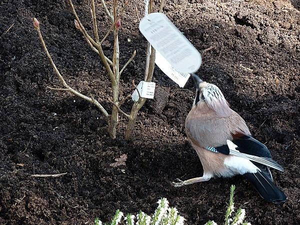 Aide jardinier Noé 05