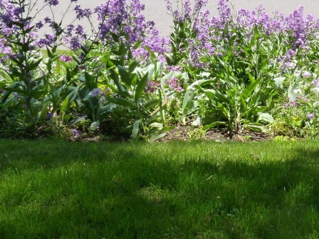 Metz en fleurs 2 mp1357 2011